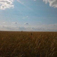 ржаное поле :: Чулпан Латыпова