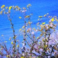 Жёлтые на синем :: Ирина Сивовол