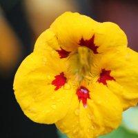 цветок :: Артем Аленин