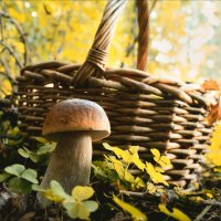 В лесу осеннем... :: Елена Kазак