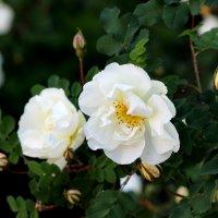 Цветы :: Татьяна Хохлова