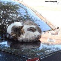Таксист в ожидании заказа :: Артур Рыжаков