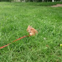 Кролик :: Евгений Косых
