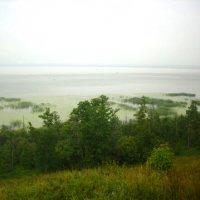 Чухломское озеро :: Ольга Евдокимова