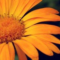 Цветок :: Оксана Ананьева