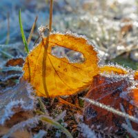 Зима уже рядом!!! :: Олег Кулябин