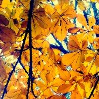 Осенние жёлтые листья :: Татьяна Королёва