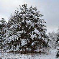 Утро в сибирском лесу. :: Алексей Ефимов