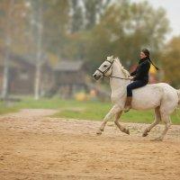 Лошадь :: Татьяна Бочок