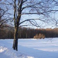 парк в конце марта :: Анна Воробьева