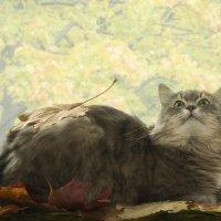 Масяня и золотая осень :: Ирина Приходько