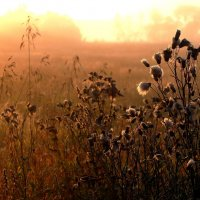 Осенний рассвет :: Оксана ДоброВольская