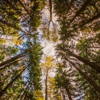 Осенний лес... :: Сергей Милославский