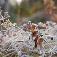 Первые морозцы :: Yuri Mekhonoshin
