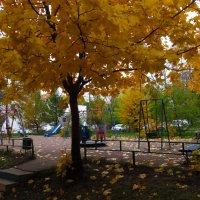 Золотая осень в моем дворе :: Андрей Лукьянов
