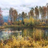 Краски осени :: Stream