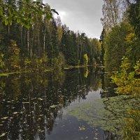 Есть в старом парке черный пруд... :: Senior Веселков Петр