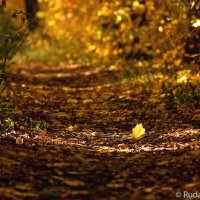 На ковре из желтых листьев :: Сергей