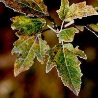 зелень, переходящая в осень :: Александр Прокудин