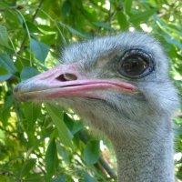 Сафари-парк «Тайган» :: Наиля