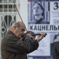 Скрипач(2) :: Александр Степовой