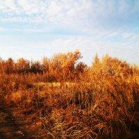 Осенний пейзаж :: Татьяна Королёва