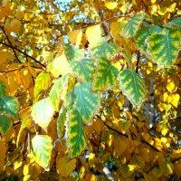 Листья. Осень. :: Татьяна Королёва