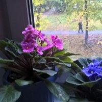 За окошком осень, а у нас весна! :: Елена Семигина