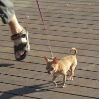 Размер обуви хозяина и размер собачки одинаков :: Герович Лилия