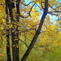 Опали листья :: Юрий Владимирович 34