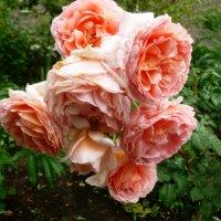 Розовый букет :: galina tihonova