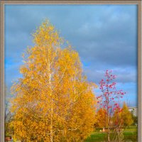 Жёлтая берёза. :: юрий Амосов