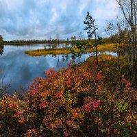 Осенняя голубика :: Фёдор. Лашков