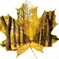 Осенний лист :: Александр Михайлов