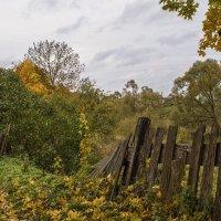 Старый забор. :: Елена Струкова