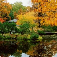 Осень в Японском саду! :: Николай Кондаков