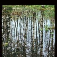 1981 год. Отражение. (отражается небо в лесу как в воде....) :: Игорь Смолин