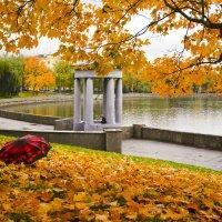 Золотая осень :: Светлана З