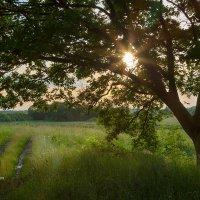 Пейзаж с дубом :: Александр Синдерёв