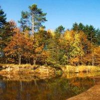 Наперекор ненастьям октября... :: Лесо-Вед (Баранов)