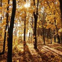 Про солнышко лесное в октябре.. :: Андрей Заломленков