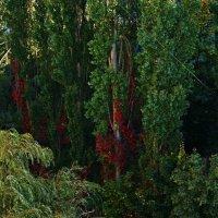 багровые вкрапления осени :: Александр Корчемный