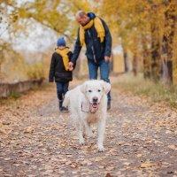 Собака друг человека :: Юлия Ворошилова