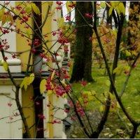 Осень в Летнем саду :: Galina Belugina