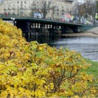 Прошлогодняя осень в Санкт-Петербурге :: Galina Belugina