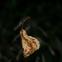 Осенний лист :: Алена Малыгина