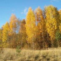Karsakiškio ruduo / Autumn in Karsakiškis :: silvestras gaiziunas gaiziunas