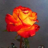 Необычная красотка :: Светлана