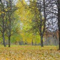 Пришла осень. :: Александр Атаулин