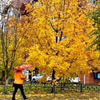 В город пришла осень. :: Михаил Столяров